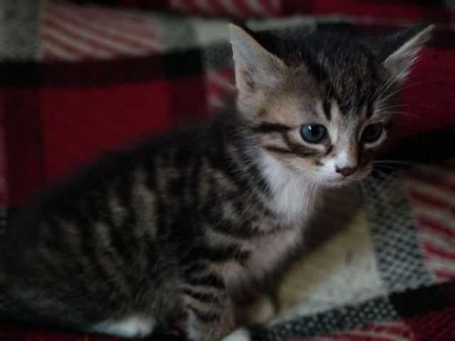 Отдам даром: Котеек