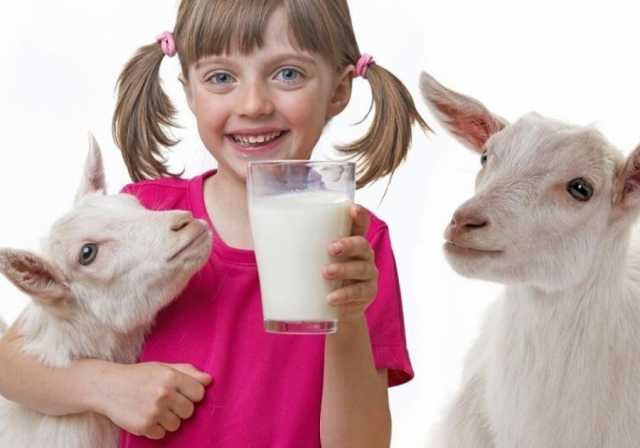 Продам: Козье молоко