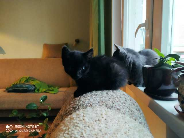 Отдам даром: Котята 2 месяца