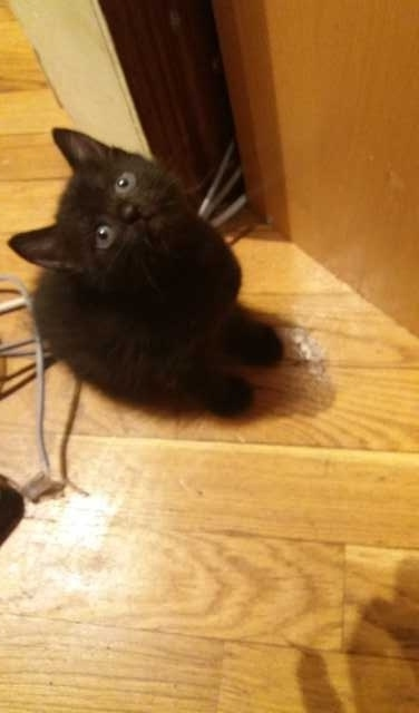 Отдам даром: Котенок 1.5 ( кот) черненький