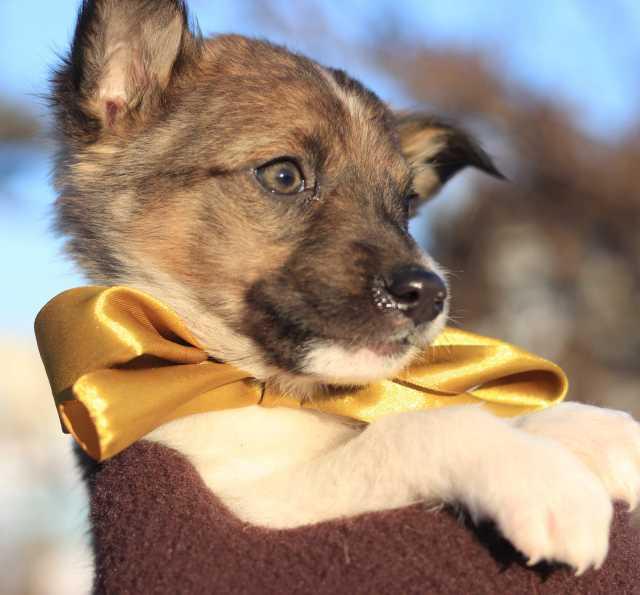 Отдам даром: Потрясающие щенки