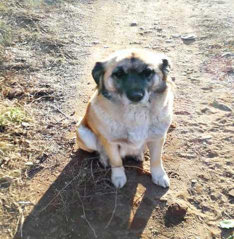 Отдам даром: Крупная стерилизованная собака