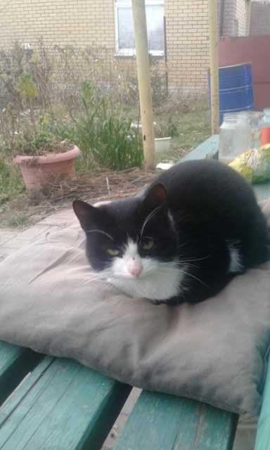 Отдам даром: Кошка-потеряшка