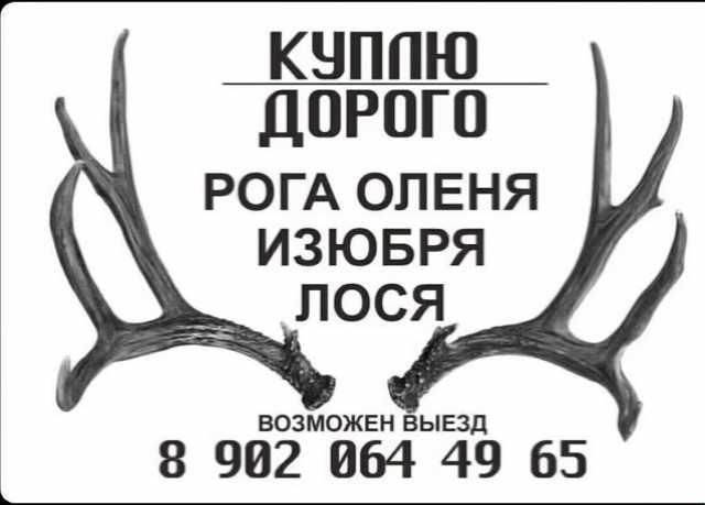 Куплю: рога