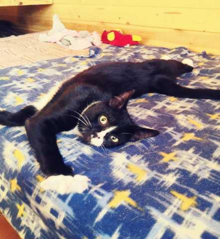Отдам даром: Смешной и очень веселый котенок
