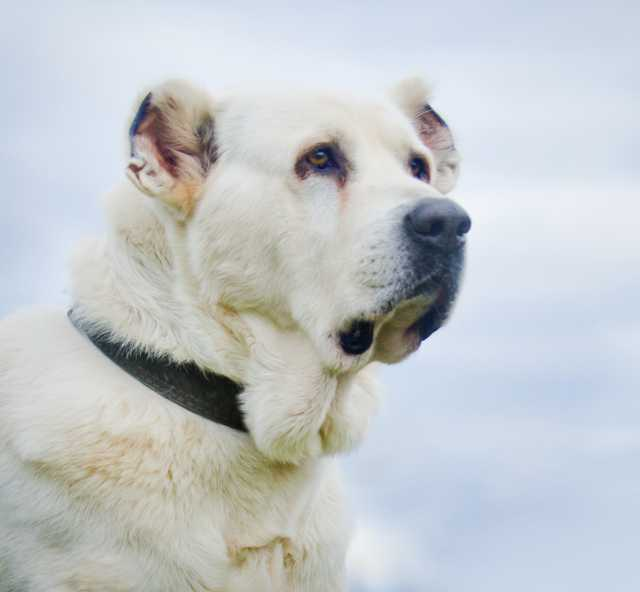 Отдам даром: Собака