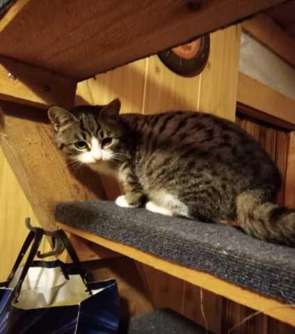 Отдам даром: Полосатый котенок Зефир