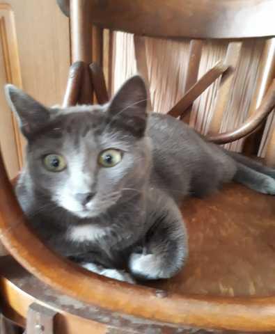 Отдам даром: Кошечка ищет дом