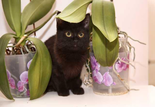 Отдам даром: Котенок Антошка в добрые руки