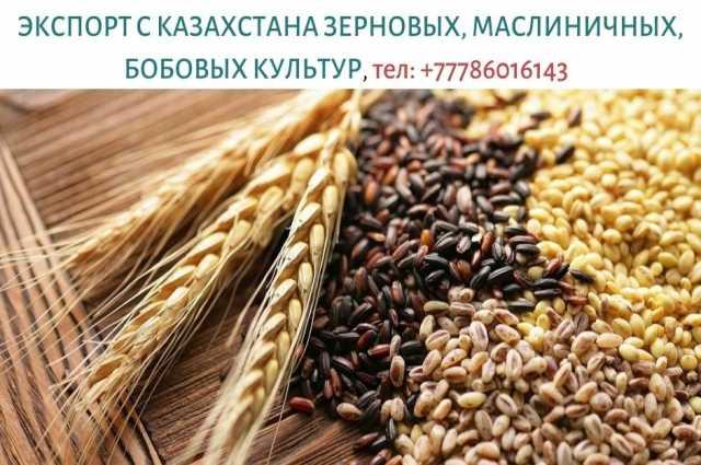 Продам: Экспорт зерновых с Казахстана