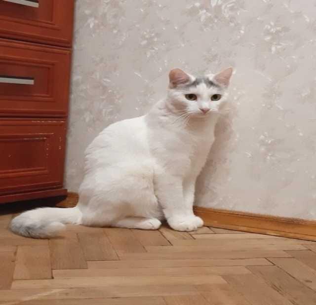 Отдам даром: Нежная красавица в белой шубке ищет дом