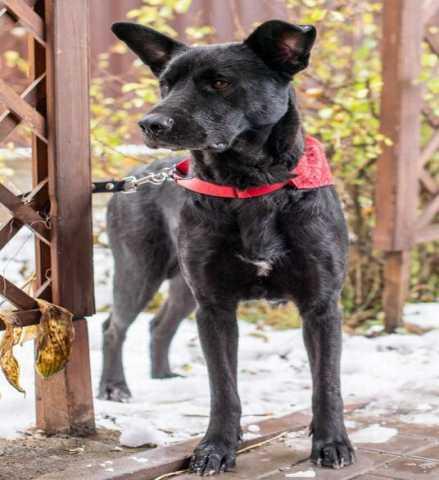 Отдам даром: Мудрая собака Муха ищет семью