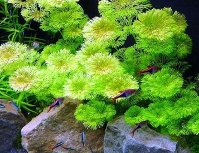 Продам: Аквариумные растения