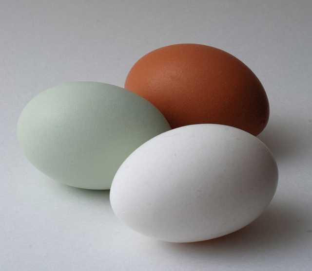 Продам: Инкубационное яйцо с Генофонда