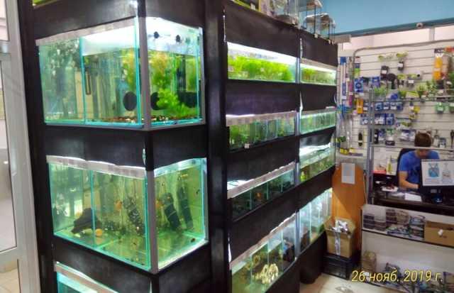 Продам: Рыбки, растения, декор, аквариумы, корма