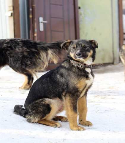 Отдам даром: Эрика- красивая и грациозная собака