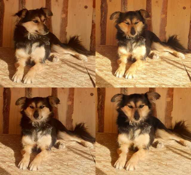 Отдам даром: Лили- собака компаньон для всей семьи