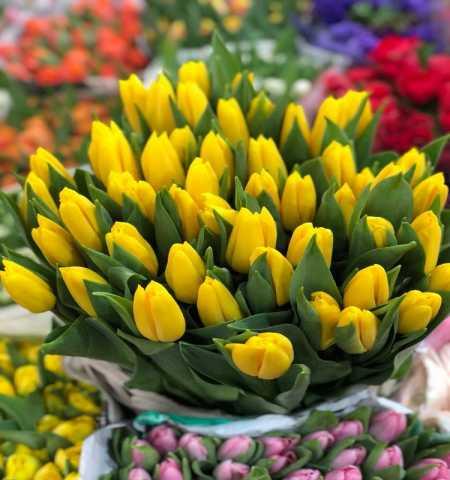 Продам: Тюльпаны оптом Strong Gold от производит