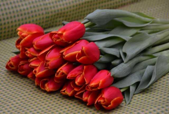 """Продам: Тюльпаны оптом """"Verandi"""" до 60см от прои"""