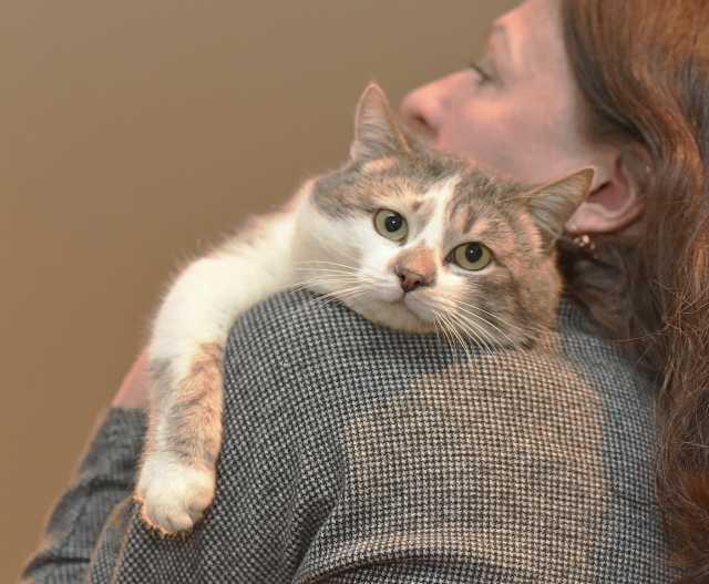 Отдам даром: Котик Вильям ищет дом
