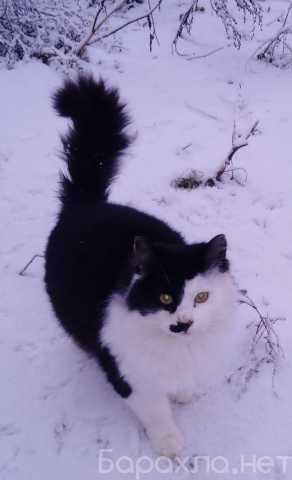 Отдам даром: Котик Базилик