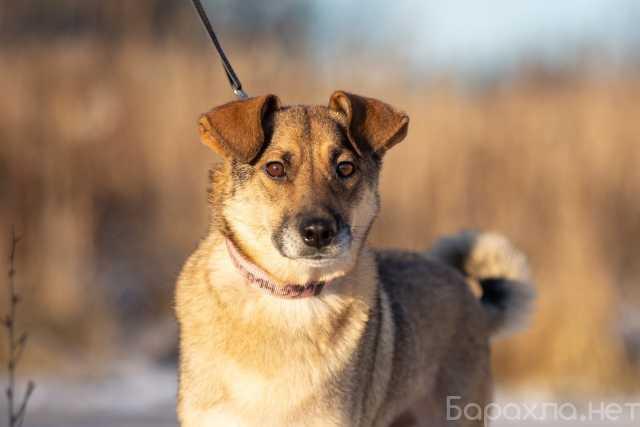 Отдам даром: Замечательная собачка Буся ищет дом