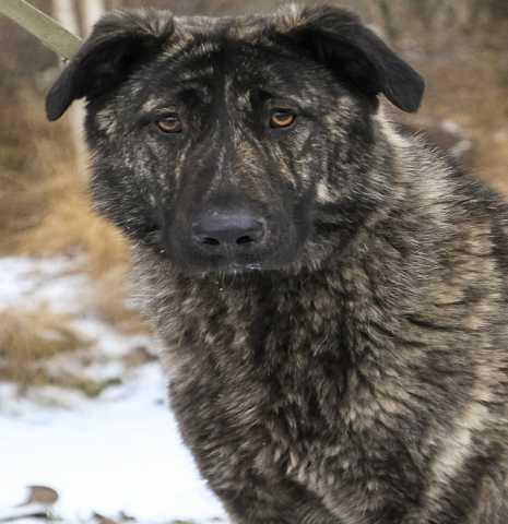 Отдам даром: Диана очаровательная молодая собака