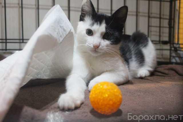 Отдам даром: Хорошенький котенок с круглыми глазками