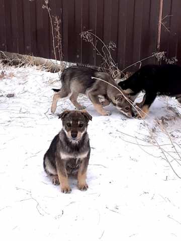 Отдам даром: Смешные щенята ищут дом
