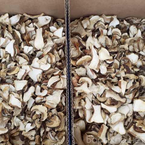 Продам: Сухой белый гриб оптом