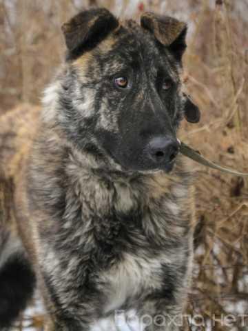 Отдам даром: Дива красивая молодая собака