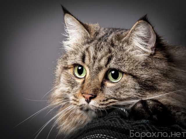 Отдам даром: Мышеловка Кошка