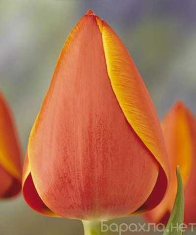 Продам: Цветы оптом. Оптовый склад