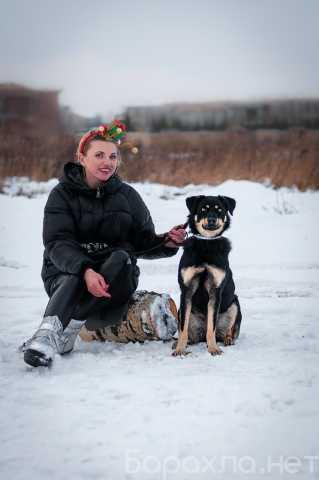 Отдам даром: Умная небольшая собачка Эмма в дар