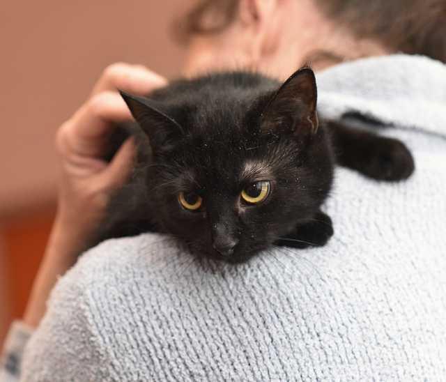 Отдам даром: Кошечка Шанель ищет дом