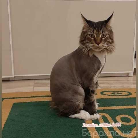 Предложение: Стрижка кошек и собак. Груминг животных