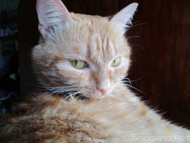 Отдам даром: Котик Эрик ищет смых лучших хозяев