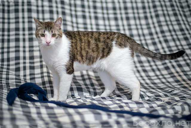 Отдам даром: Матвей, молодой домашний котик в дар