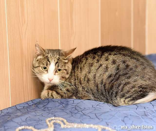 Отдам даром: Молодой котик Шерлок ищет дом