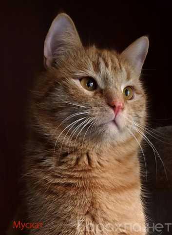 Отдам даром: Хороший кот для хороших людей!