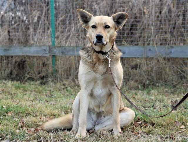 Отдам даром: Собака, которая познала Дзен ищет дом