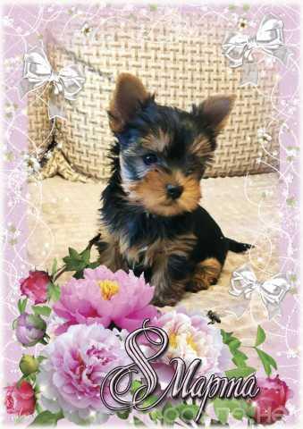 Продам: Йоркширского терьера щенки