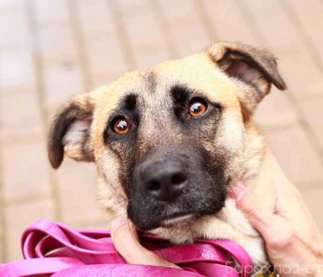 Отдам даром: Красавица собака по имени Лиса в дар