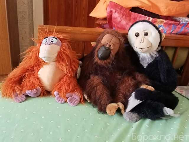 Продам: шикарных обезьян в хорошие руки