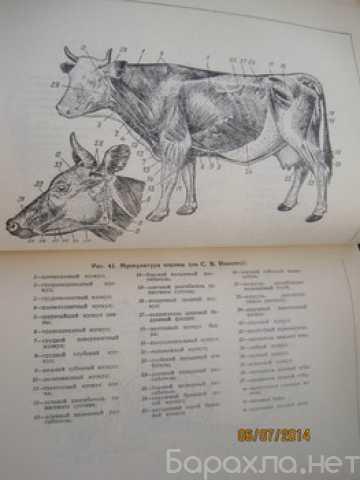 Продам: 1959 * Технология МЯСА и мясопродуктов