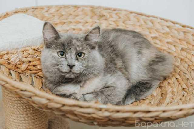 Отдам даром: Ищет дом маленькая славная кошка Фунтик!