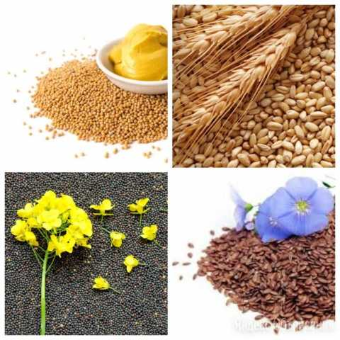 Куплю: зерно