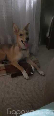 Отдам даром: Собака щенок
