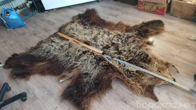 Продам: Шкура медведя волка оленя лисы