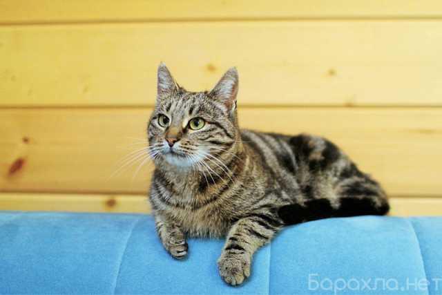 Отдам даром: Кошечка Василиса ищет любящую семью!